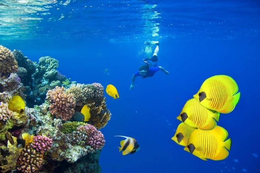 Búvárkodás a Vörös-tengerben